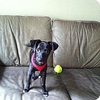 Adopt A Pet :: Barney - Marlton, NJ