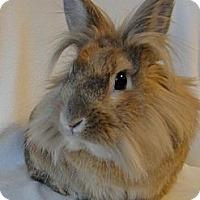 Adopt A Pet :: Lionel Ritchie - Los Angeles, CA