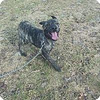 Adopt A Pet :: Leto - Cincinnati, OH