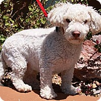 Adopt A Pet :: Thurman - Gilbert, AZ