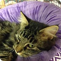 Adopt A Pet :: Kathleen - McDonough, GA