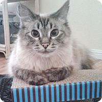 Adopt A Pet :: Baker - Davis, CA