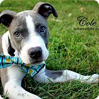 Adopt A Pet :: Cole - Southampton, PA