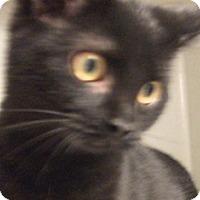 Adopt A Pet :: raven - Keokuk, IA