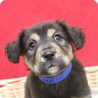 Adopt A Pet :: Yoyo - Waldorf, MD