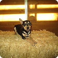 Adopt A Pet :: Lulu - Perris, CA
