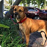 Adopt A Pet :: Ryder - Ft. Lauderdale, FL
