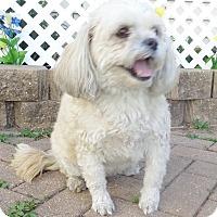 Adopt A Pet :: Uma - West Chicago, IL