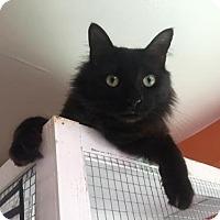 Adopt A Pet :: Ricky 2 - Hampton, VA
