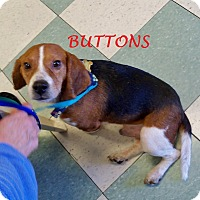 Adopt A Pet :: BUTTONS - Ventnor City, NJ