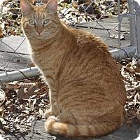 Adopt A Pet :: Teddy - Greensboro, NC