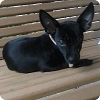 Adopt A Pet :: Gwen - Fairfield, OH