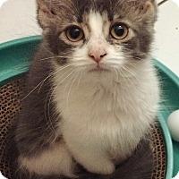 Adopt A Pet :: Eleanor - Toronto, ON