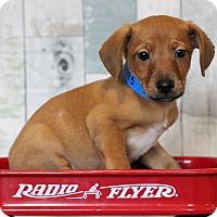 Adopt A Pet :: Mario - Waldorf, MD
