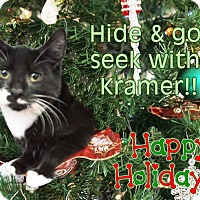 Adopt A Pet :: Kramer - East Brunswick, NJ
