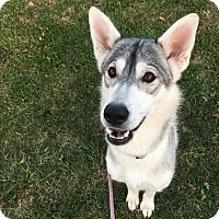 Adopt A Pet :: Grace - Keswick, ON