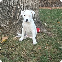 Adopt A Pet :: Pearl (FORT COLLINS) - Fort Collins, CO