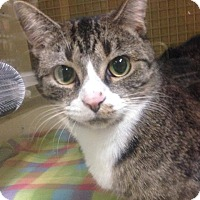 Adopt A Pet :: Scarlette - Hendersonville, NC