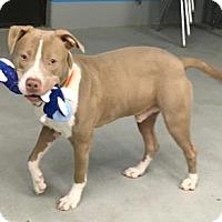 Adopt A Pet :: Rudy - Green Bay, WI