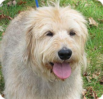 Benji adopted dog lm allentown pa petit basset - Petit basset griffon vendeen breeders toulon ...