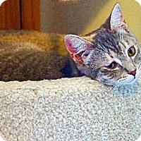 Adopt A Pet :: Heidi - Victor, NY