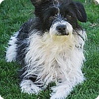 Adopt A Pet :: BENNIE - Mission Viejo, CA