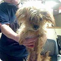 Adopt A Pet :: Goblin - Antioch, IL