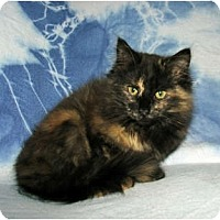 Adopt A Pet :: Spice - Norwich, NY