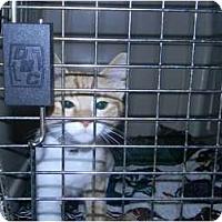 Adopt A Pet :: Emilio - Mobile, AL
