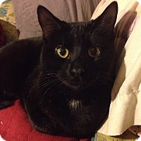 Adopt A Pet :: Berlioz - Santa Rosa, CA