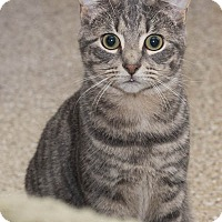 Adopt A Pet :: Oscar Wilde - Lombard, IL