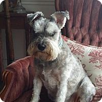 Adopt A Pet :: Gracie-Peral - Clarksville, TN
