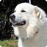 Adopt A Pet :: Dot - Indian Trail, NC