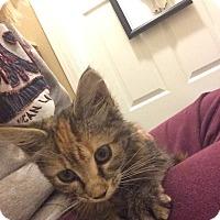 Adopt A Pet :: Lady Edith - Bentonville, AR