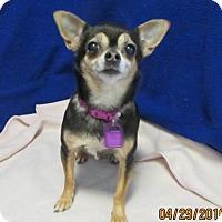 Adopt A Pet :: Juliet - Mukwonago, WI