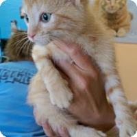 Adopt A Pet :: Frisco - Fort Collins, CO