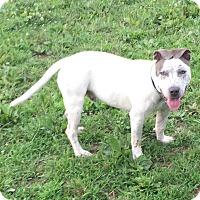 Adopt A Pet :: Pongo - Prospect,, KY
