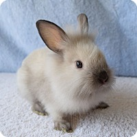 Adopt A Pet :: Pumba - Fountain Valley, CA