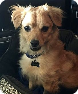 Spaniel (Unknown Type) Mix Dog for adoption in Rockville, Maryland - Tanner