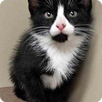 Adopt A Pet :: Tad - Oswego, IL