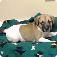 Adopt A Pet :: Henry - Lebanon, ME