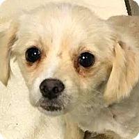 Adopt A Pet :: Fineus - Boulder, CO