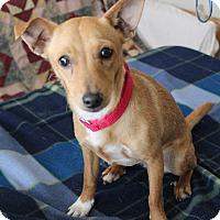 Adopt A Pet :: TAFFY - Hurricane, UT