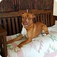 Adopt A Pet :: Kylo - Atchison, KS