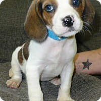 Adopt A Pet :: Patches - Eastpoint, FL