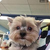 Adopt A Pet :: Finley - Jupiter, FL