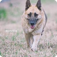 Adopt A Pet :: Bonny - Dickinson, TX