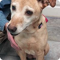 Adopt A Pet :: Luka - King City, ON
