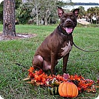 Adopt A Pet :: Rango - Naples, FL