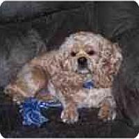 Adopt A Pet :: Sadie - Tacoma, WA